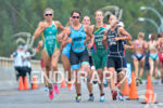 Elite women's running pack at the 2014 ITU Grand Final…